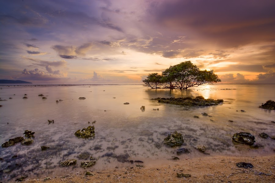 Sunset at Beach by Yossy Ryananta - Landscapes Beaches ( sand, lone tree, tree, sunset, beach, coast,  )