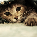 Cute cat wallpaper icon