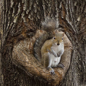 Who You Lookin At? by Jack Turkel - Animals Other Mammals ( squirrel )