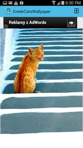 Greek Cats Pictures Wallpaper