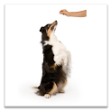 Dog Trainer icon