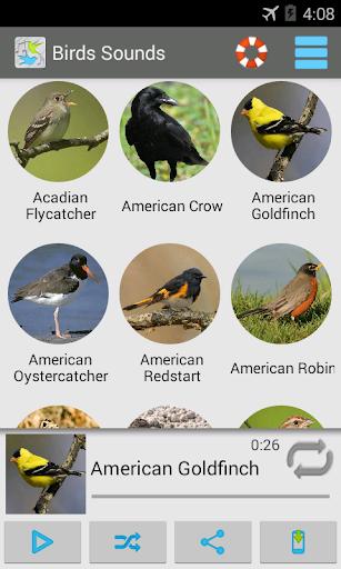 鳥類的聲音 200 +