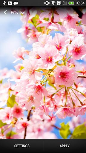 櫻花盛開的動態壁紙