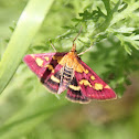 (Purple) moth