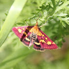 (Purple) moth