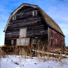 Vision of the Past ! by Jan Siemucha - Buildings & Architecture Other Exteriors ( sky, tree, barn, snow, wagon, old barn, weeds )
