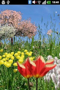 Spring Flowers Free Wallpaper- screenshot thumbnail