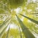 Bamboo ao vivo Wallpapers icon