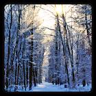 Зима обои icon
