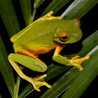 Frogs Jigsaw Puzzles icon