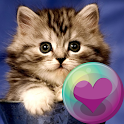 Cute Kitty Cats HD Wallpapers icon