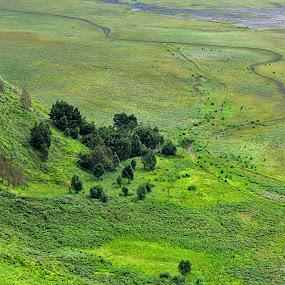 green savana by Assaifi Fajarmass - Landscapes Prairies, Meadows & Fields ( savana, green, bromo )