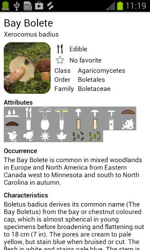 raccolta funghi