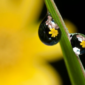 by Septyan Lestariningrum - Nature Up Close Natural Waterdrops