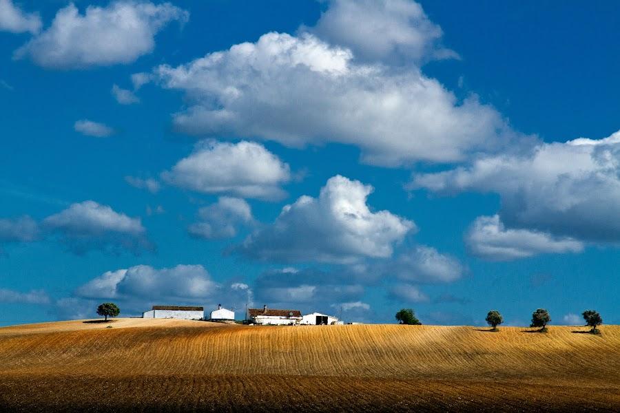 Alentejo by Luis Reininho - Landscapes Prairies, Meadows & Fields