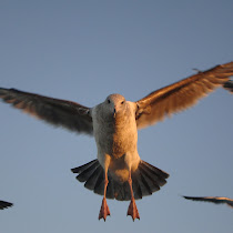 Birds of California/Arizona