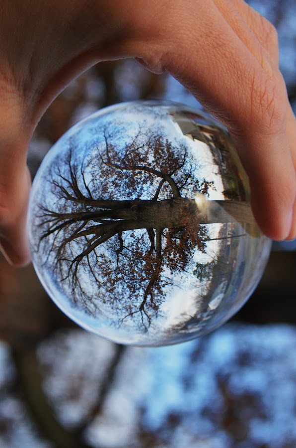 Tree in the ball by Nik Atkins - Nature Up Close Trees & Bushes ( abstract, winter, tree, crystal ball, close up )