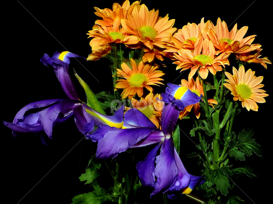 multicolor flowers by LADOCKi Elvira - Flowers Flower Arangements ( nature, color, flowers, garden,  )