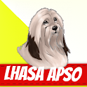Lhasa Apso Dogs