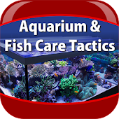 Aquarium Fish Care Tactics