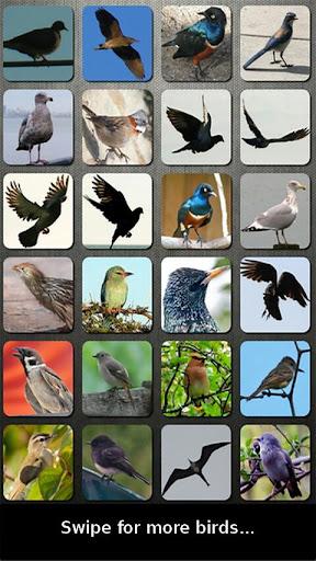 鸟音板应用