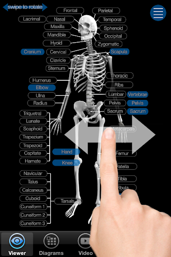 Skeletal Anatomy 3D