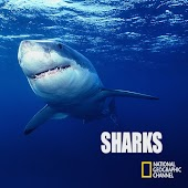 National Geographic Sharks