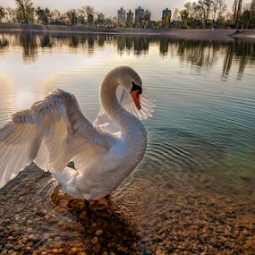 by Miro Cindrić - Animals Birds