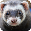 Ferret Wallpapers icon