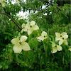 Árbol flores blancas