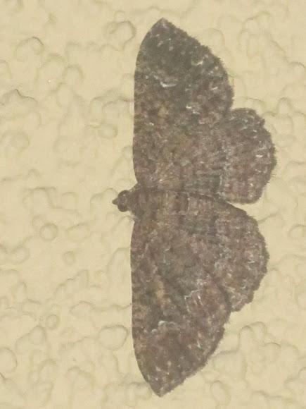 Spotting Image 1