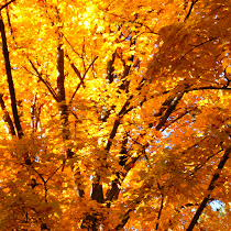 Fall Into Phenology