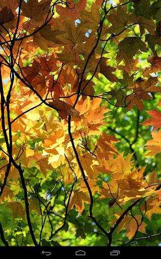 Autumn Wallpaper screenshots 14