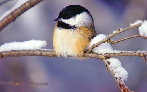Beautiful Bird HD Wallpaper