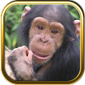 Zoo Puzzles icon