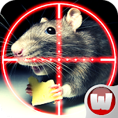 Find And Kill Rat