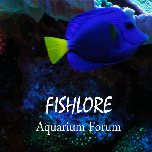 Fish Lore Aquarium Forum