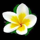 Frangipani Flowers Icon Theme