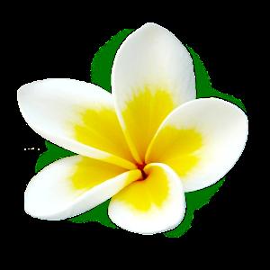 Image result for hawaiian luau