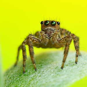 Spiders New File 4001.jpg