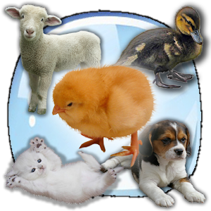 Baby Animals Sound Quiz! for PC and MAC