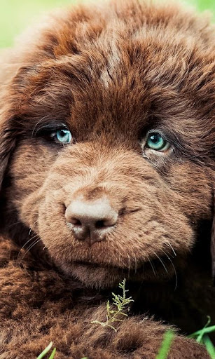 Portraits of dogs Wallpapers