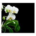 Orchids In Night V icon