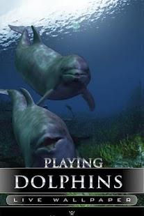 海豚生活壁紙