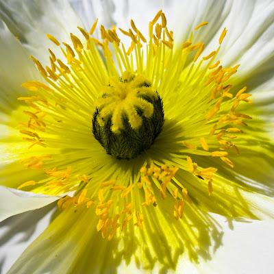fleursbotanique-1.jpg