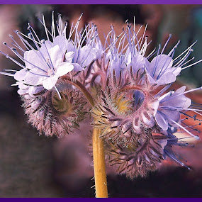 New Life by Diana Postill - Flowers Flower Gardens ( macro, nature, bud, spring, flower )