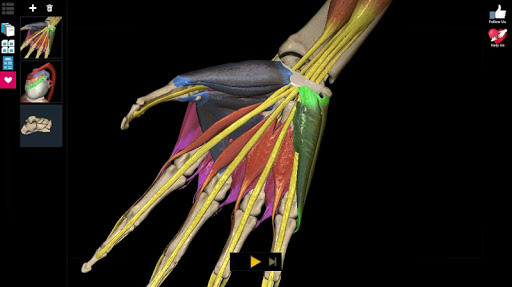 Anatomy Learning - 3D Atlas 2.1 screenshots 9