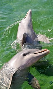 جميلة الدلافين اللغز! لعبة- screenshot thumbnail