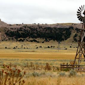 Bear Mountain Wyoming by Dan Bartlett - Landscapes Prairies, Meadows & Fields ( windmill bear mountain prarie bluffs canon,  )