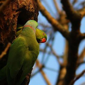 by Rajkumar Biswas - Animals Birds